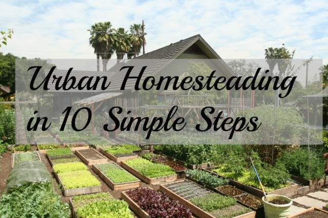 Simple steps towards self sufficient homesteading think about now