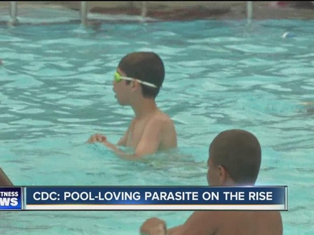 Swimming Pool Water Contamination : Cdc warns of parasite in swimming pools think about now