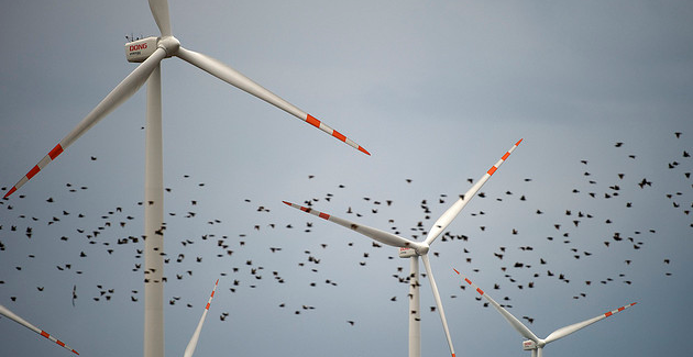 Studies Find Wind Turbines Unsustainable And Harmful To