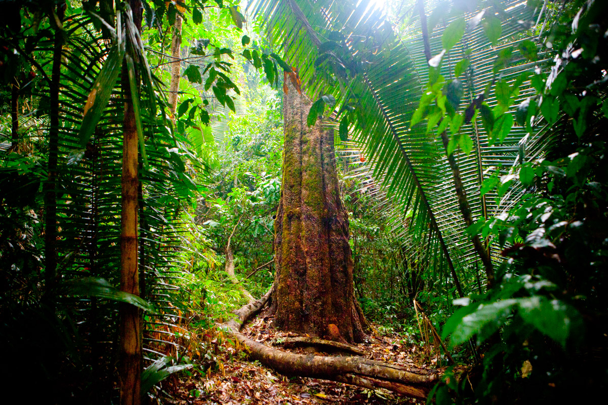 the issue of amazon rainforests deforestation in brazil The protections in question include those that apply to the amazon rainforest, the majority of which lies in brazil, which is vital to soaking up.